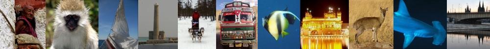 Bilder aus aller Welt